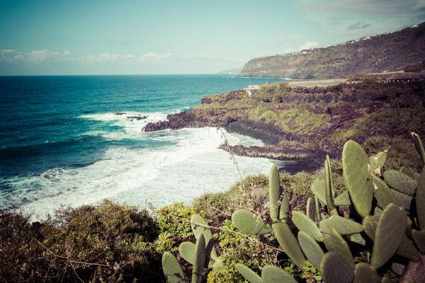 banana, plantation, on, canary, island, tenerife - 16356325