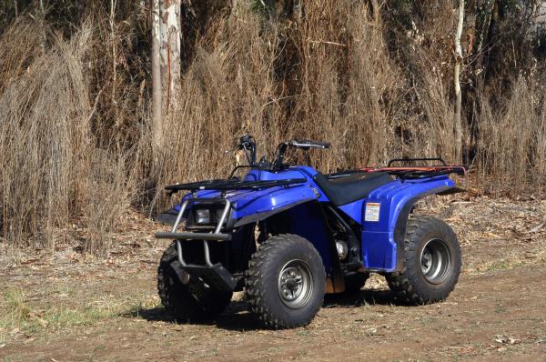 in quad in the bush