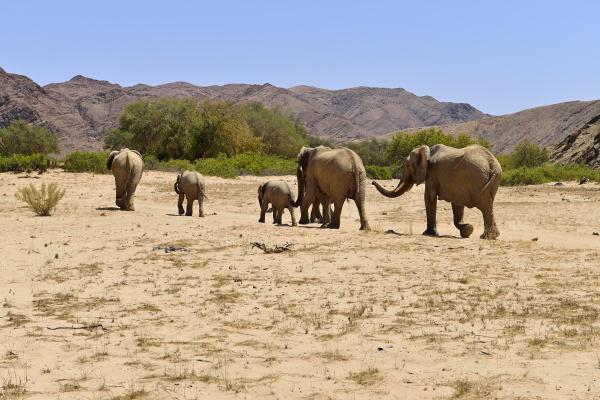 africa namibia kaokoland group of six
