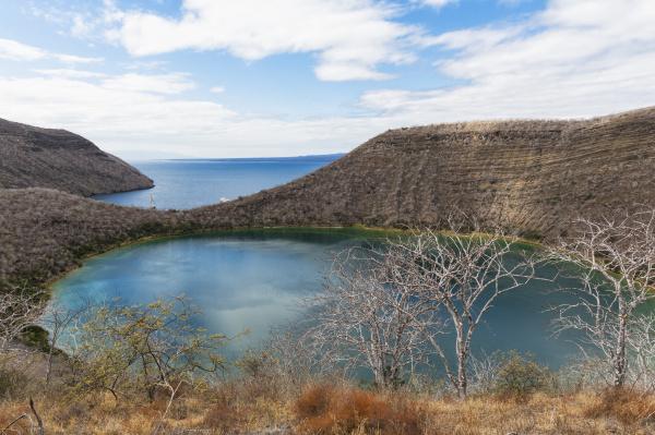 ecuador galapagos islands isabella island tagus