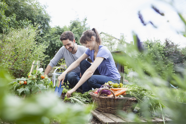 smiling couple gardening in vegetable patch