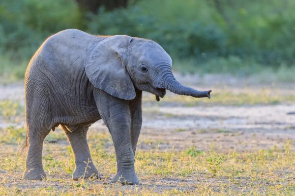 africa zimbabwe mana pools national park