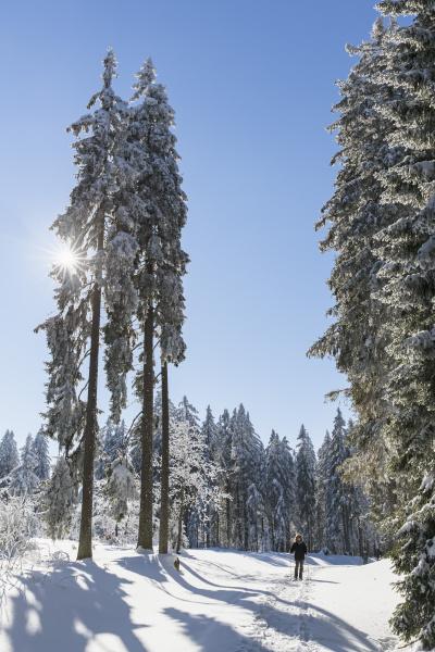 germany bavaria bohemian forest