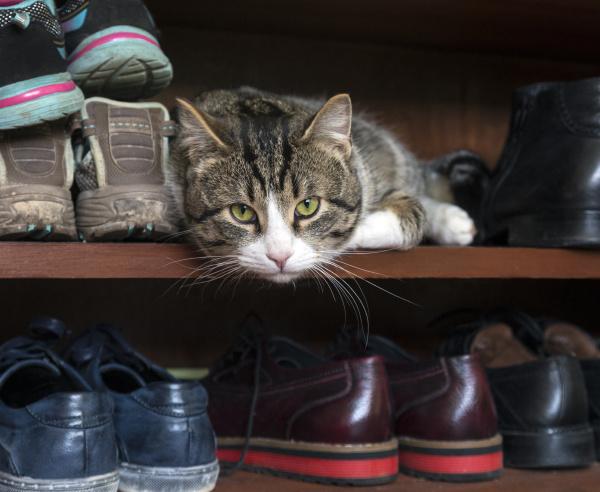 cat lying in shoe rack