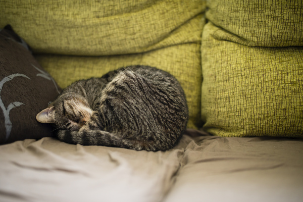 tabby cat sleeping on the couch
