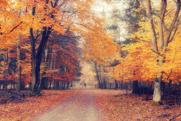 foggy autumn park