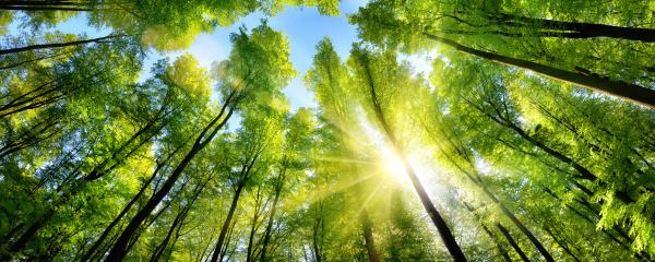 enchanting sunshine on green treetops in