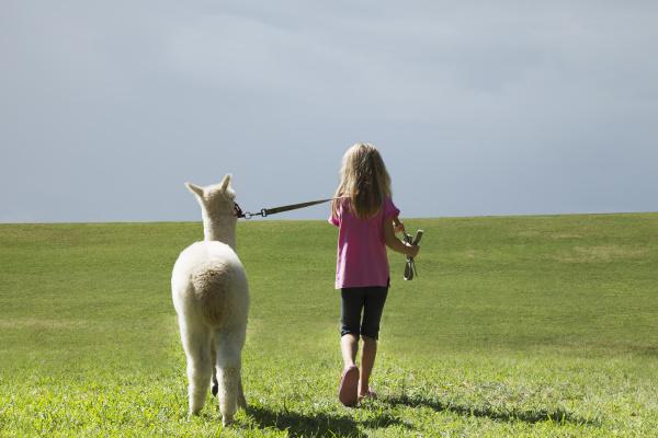 girl walking alpaca