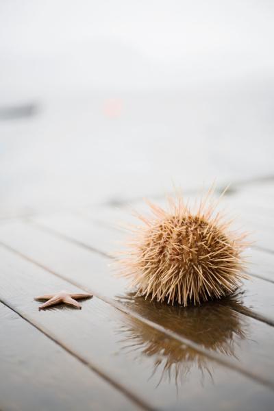 sea star and sea urchin on