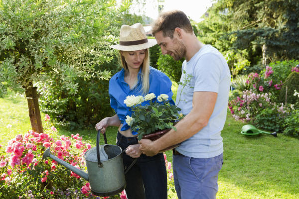 mid adult couple watering rose bush