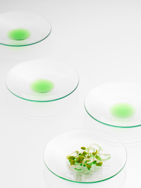 sprouts on a petri dish