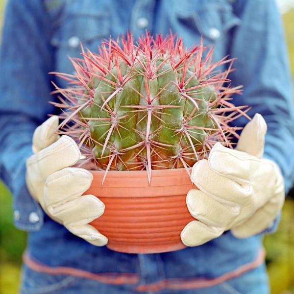 round cactus