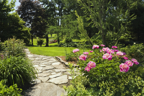 flagstone path and pink peony flowers