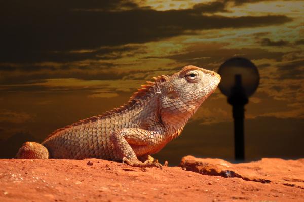 rise of the chameleon