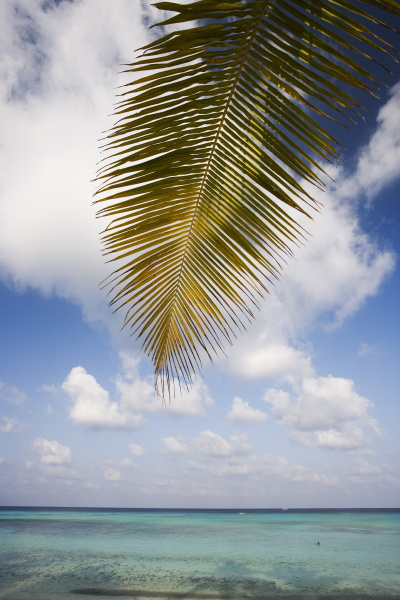 palm leaf maldives