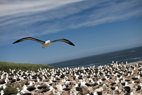 seagull in flight while the rest