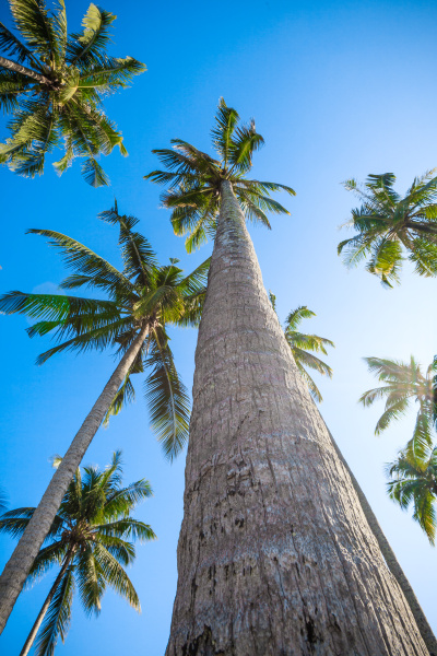 nice palm trees in the blue