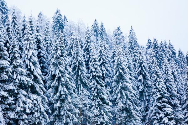 winter snow covered tree winter