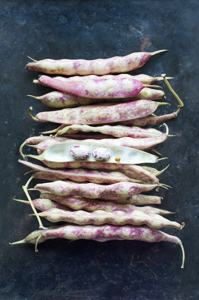 pinto beans still life