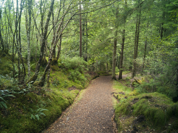 path through trees highland