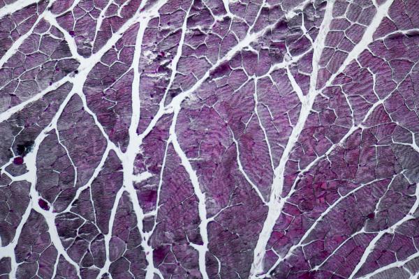 microscopic neck organs
