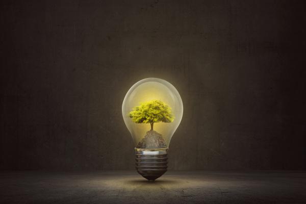 small tree inside light bulb on