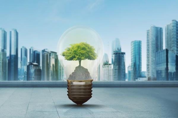 green tree inside light bulb against