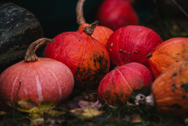 close up on red pumpkin on