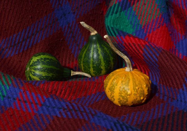 green gourds with orange warty ornamental