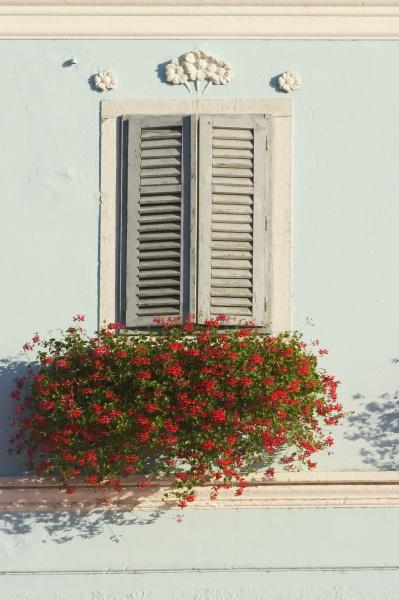 vrsar istria croatia flower decorated window