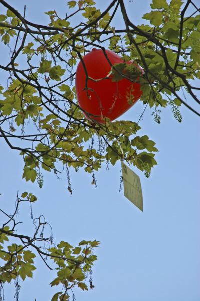 blue travel transport communication branch balloon