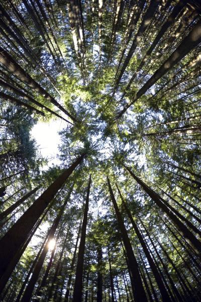 low angle view of hemlock grove