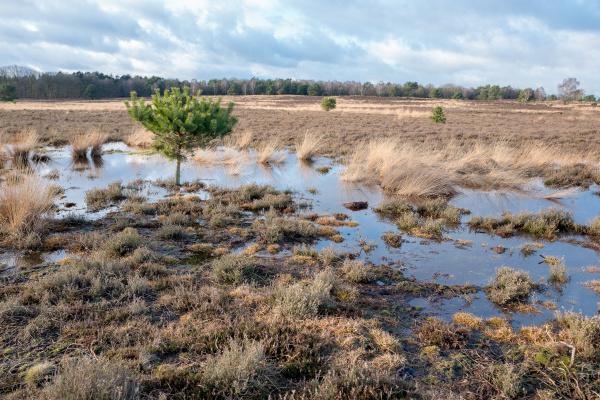 swampon the heath in elspeet