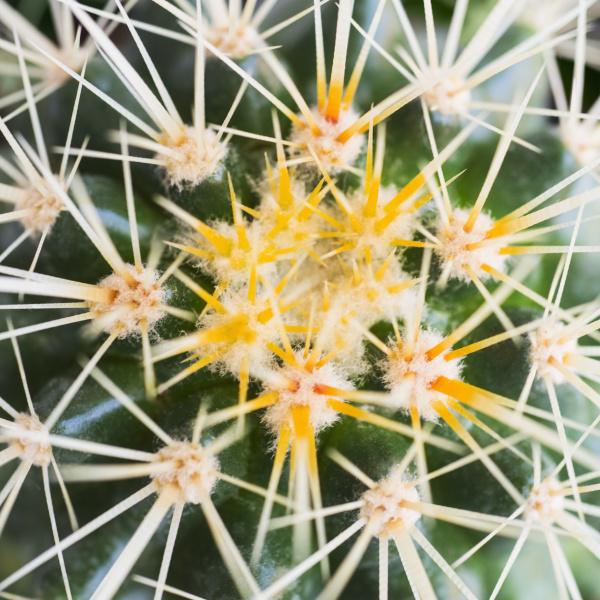 studio shot of cactus