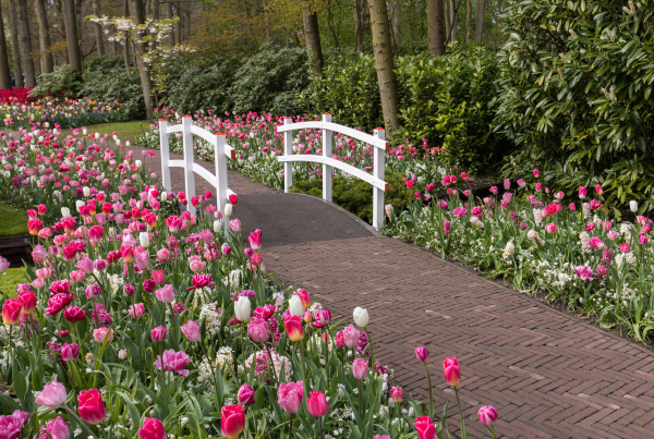 romantic path in the park between