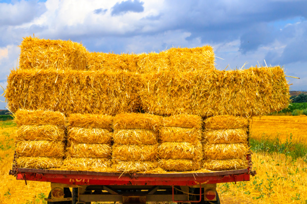 hay wagon with hay bales on