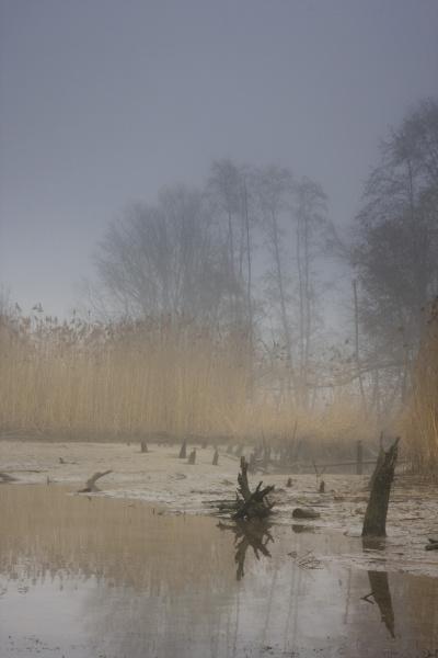 donaualtarm in the fog danube