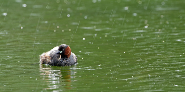 waters animal bird fauna animals austrians