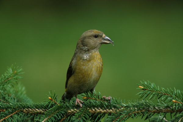 animal bird fauna animals birds deserted