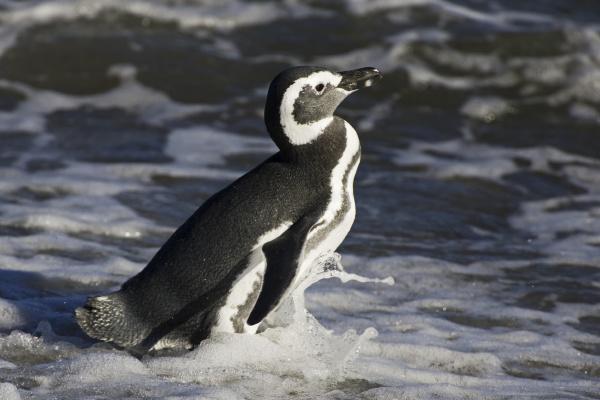 american animal bird fauna animals conservation