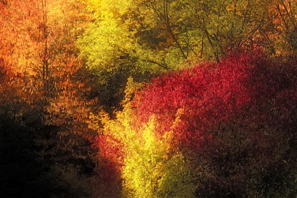 autumn colors impressionistically alienated
