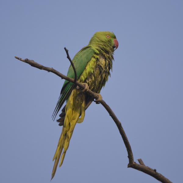 animal bird fauna national park asia