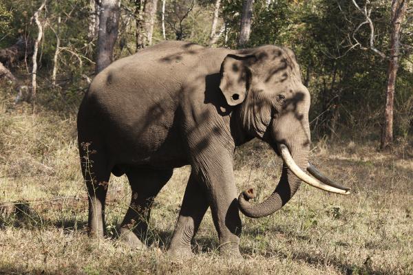 profile park animal mammal fauna national