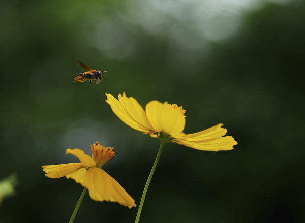close up of bee buzzing by
