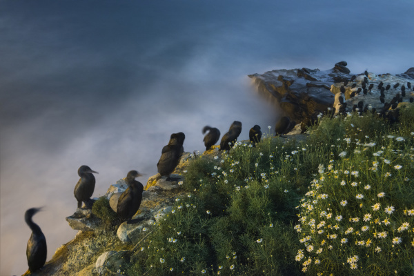 high angle view of cormorants perching