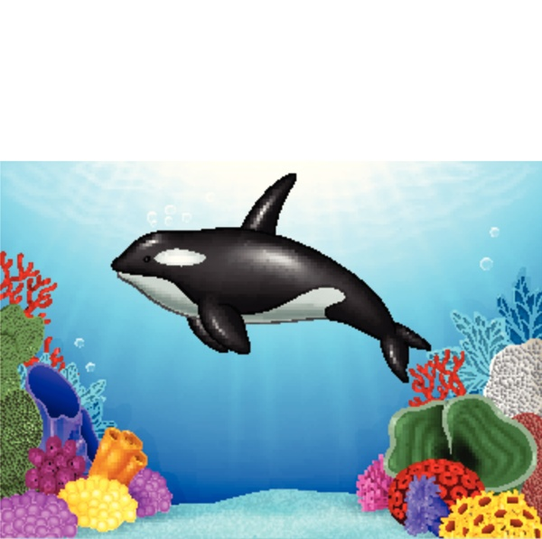 cartoon killer whale with coral reef