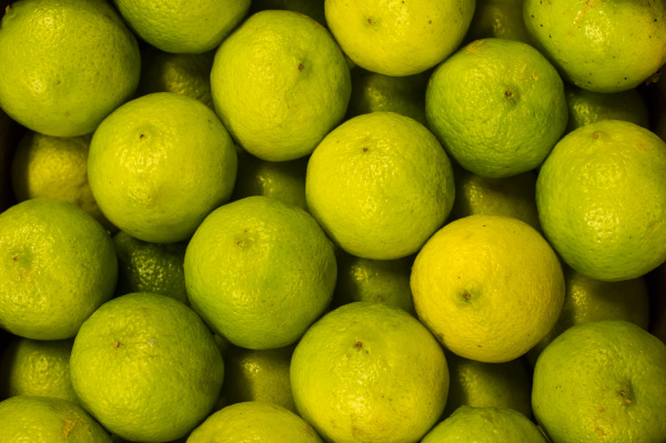studio photography closeup green progenies fruits