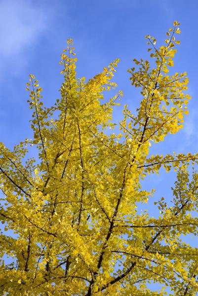orange tree trees europe mood autumnal