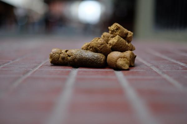 dog photos in buenos aires 2015
