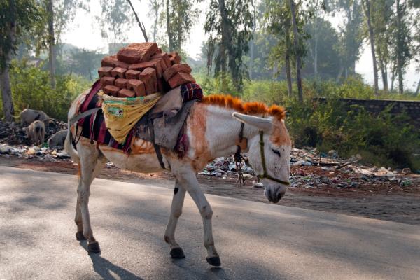 donkey loaded with bricks agra uttar